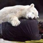 Las 10 mejores historias de animales del 2007