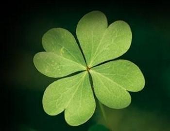 El poderoso trébol de cuatro hojas