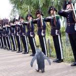 El pingüino rey, mascota real
