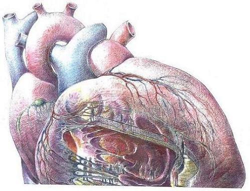 Dibujo de corazon