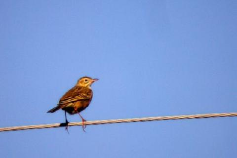Un pajaro sobre un cable de alta tension
