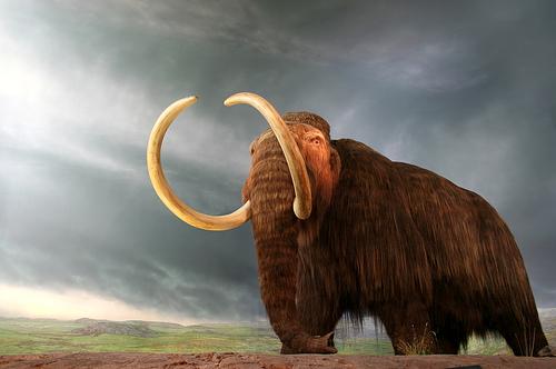 mamuts, naceran, existir, genetica, ciencia, elefante