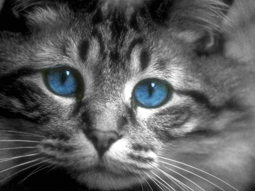 foto de mirada de gato