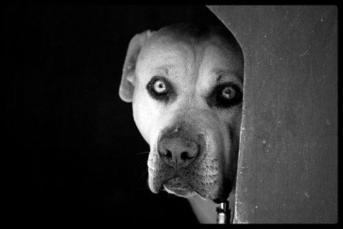 foto de perro