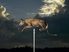 cindy-record-de-salto-de-altura-perros
