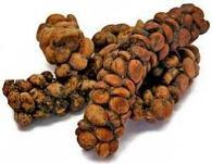 granos de cafe Luwak