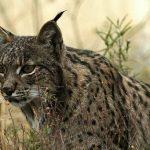 Animales en peligro y vías de extinción
