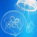Las medusas, su picadura y cómo tratarlas