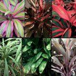 La percepción extrasensorial de las plantas