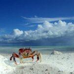 La curiosa migración anual de los cangrejos
