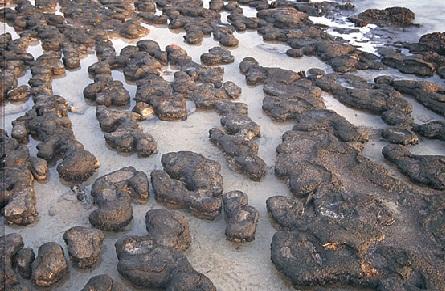 Fósiles de las algas unicelulares mas antiguas