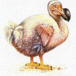 ¿Cuándo se extinguió el dodo?