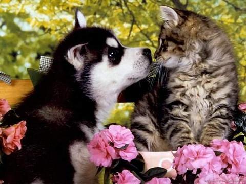 Foto de perritos