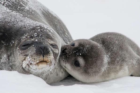 Besos de focas