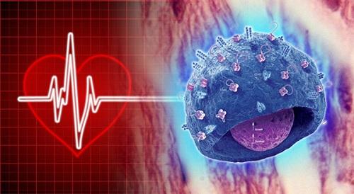 memoria celular - La memoria celular en trasplantes de órganos