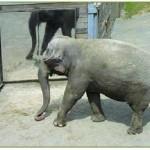 ¿Qué animales se reconocen en el espejo?