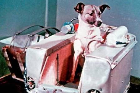 Laika, el primer ser vivo en el espacio