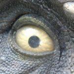 Las costumbres de los dinosaurios