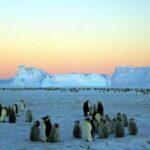 Las garrapatas y el cambio climático en la Antártida