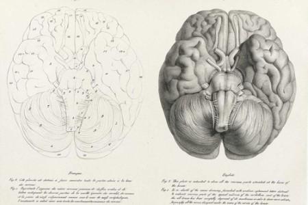 Frenología, antigua e insólita teoría