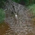 La tela de araña, más fuerte que el acero