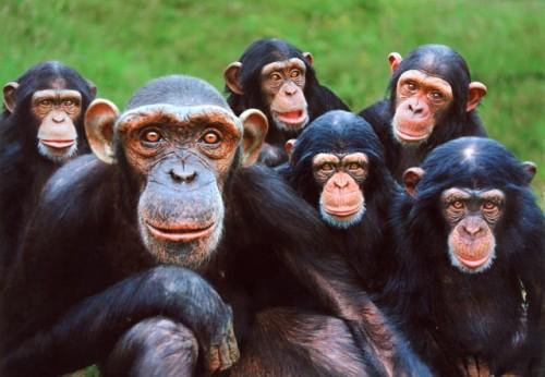 primates inteligentes