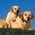 Los orígenes del perro
