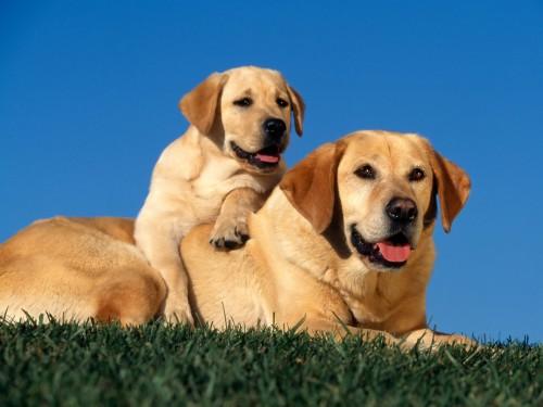 origenes de los perros