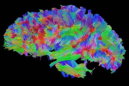 Mentiras sobre el cerebro humano