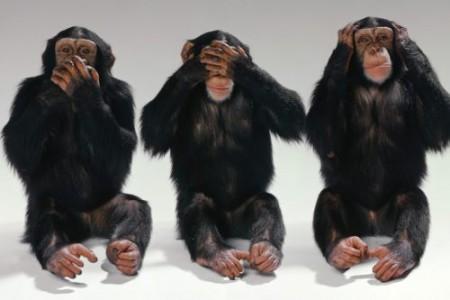 ¿Pueden los monos aprender a leer?