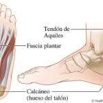 ¿Qué es el tendón y el talón de Aquiles?
