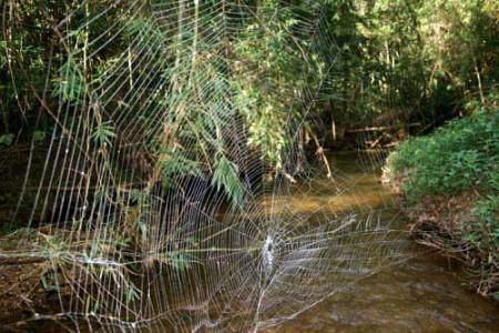 La Araña Ladradora y su telaraña