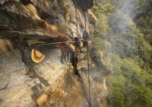 Cosecha de miel tibetana