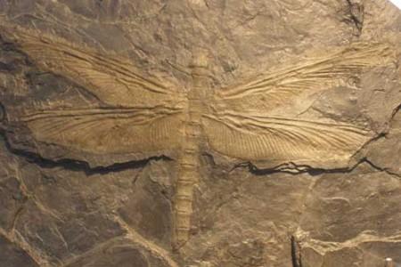 Cuando los insectos gigantes dominaban la Tierra