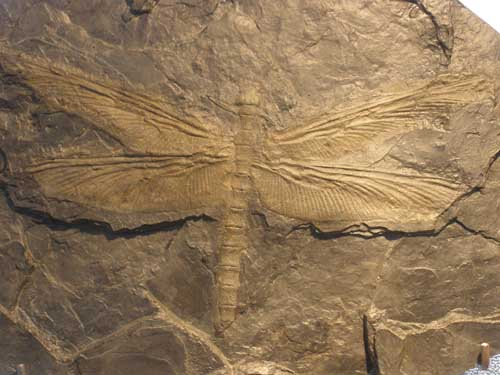 Periodo Carbonifero