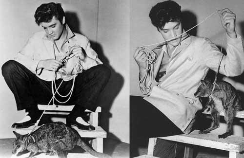 Elvis y su canguro