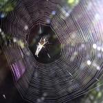 ¿Por qué las arañas no se pegan en su propia tela?