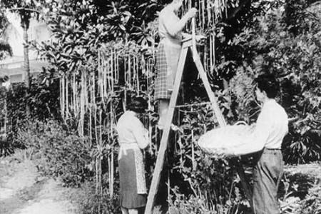 La BBC y la cosecha suiza de espaguetis