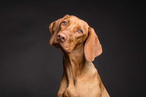 Frontline para la protección de tu perro